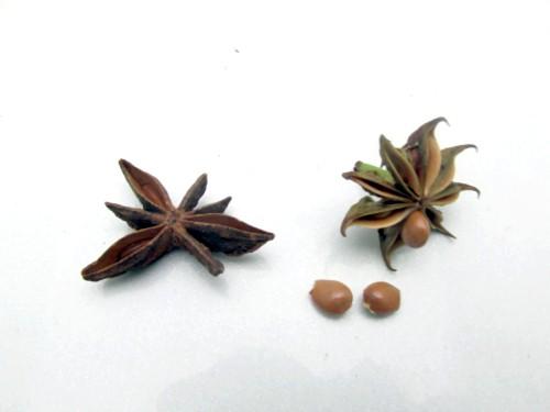 スターアニスと樒の種子