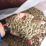コスタリカのコーヒー豆
