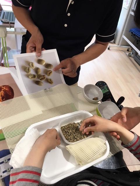 コーヒー,生豆,ハンドピック