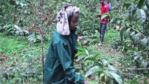 エチオピア, コーヒー豆, 女性