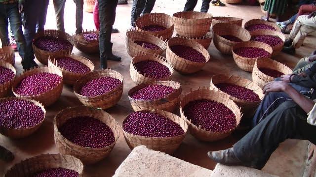 コーヒー豆, Hambela, Buku